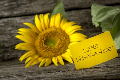 life insurance sign and a sunflower