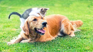 image of dog and kitten