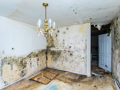 image of mold in house